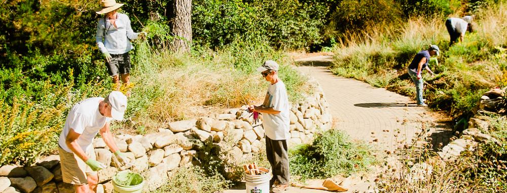 group of volunteers working in the uc davis arboretum